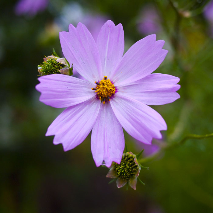 20090923_oh_flowers1