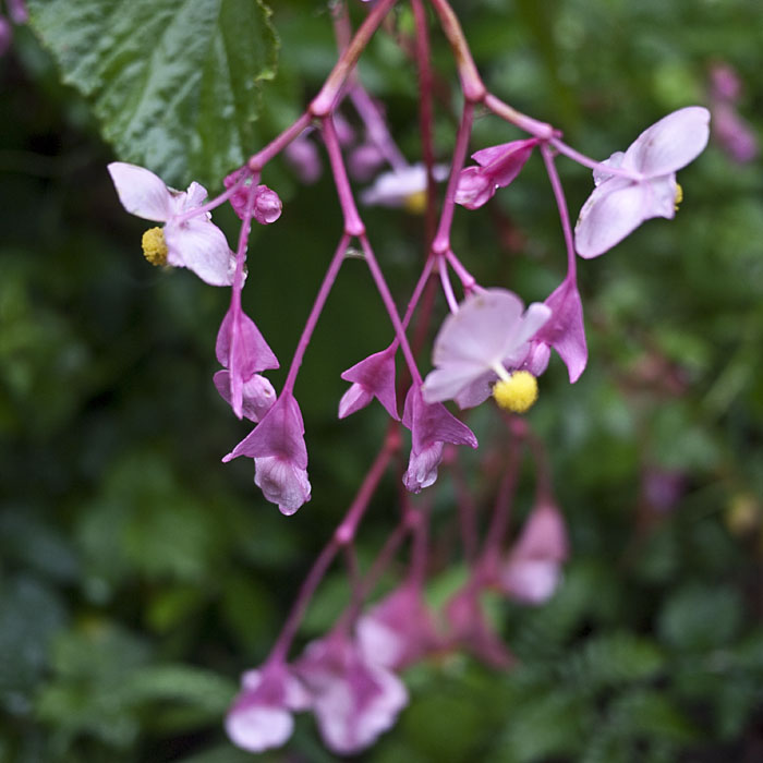 20090923_oh_flowers7