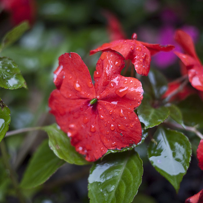 20090923_oh_flowers9